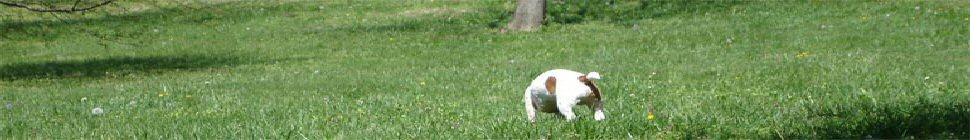 Arturo Revilla . com header image 2